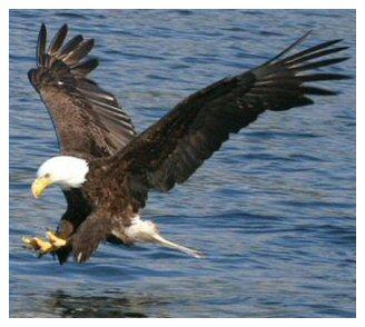 Www.eagles.com