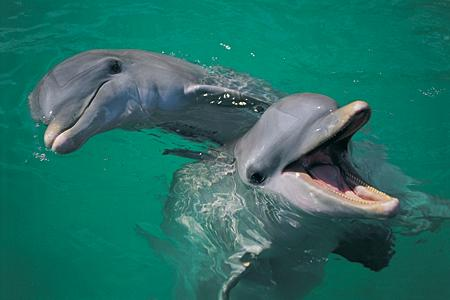 usa florida high manatee dolphin deaths puzzle us officials
