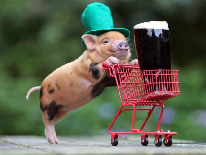 Pig is Still a Pig