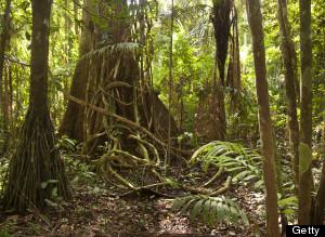 s-AMAZON-RAIN-FOREST-large300