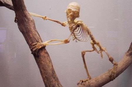 tamarim-skeleton