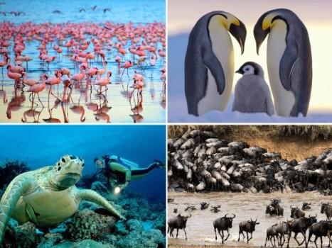 amazing_animals0