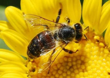 Ancient-Bees
