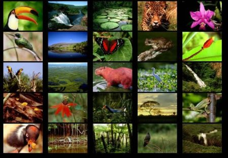 animals-of-the-rainforest