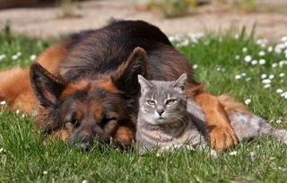 dog_and_cat_friends