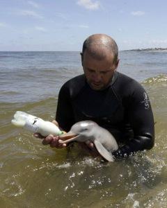 man_feeding_baby_dolphin