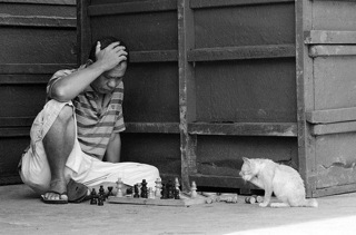 man_playing_chess_cat