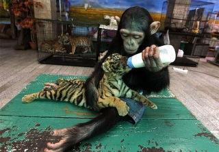 monkey_feeding