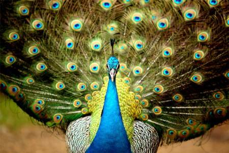 Most-Beautiful-Animals