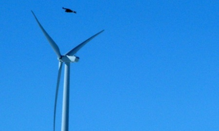 Wind Energy Eagle Deaths