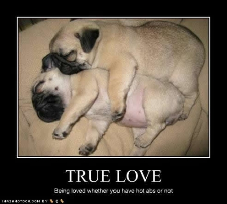 cute-puppy-pictures-true-love (1)