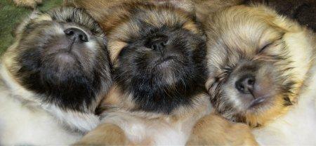 dsc_0615-puppy-love