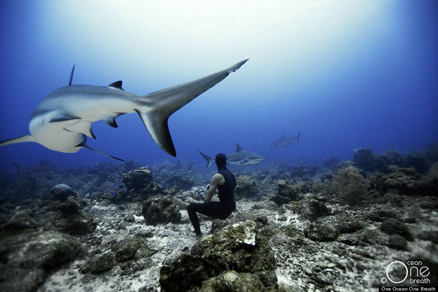 These Stunning Underwater Photos Taken By Free Divers Are