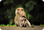 The-Bond-between-parents-and-Children-are-lifetime-Easy-Branches
