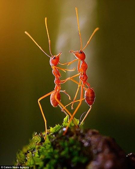 ants_dancing