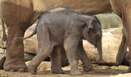baby_elephant_close