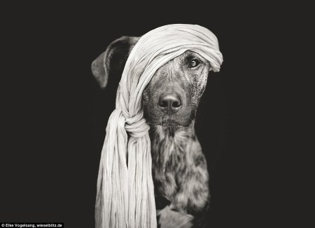 dog_model
