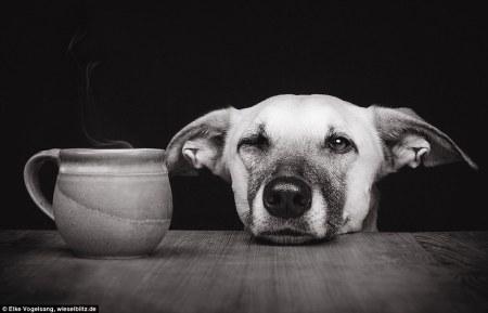 dog_model2