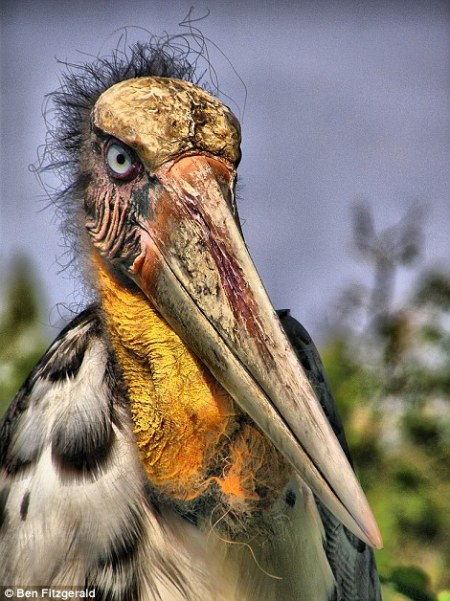 endangered_birds2