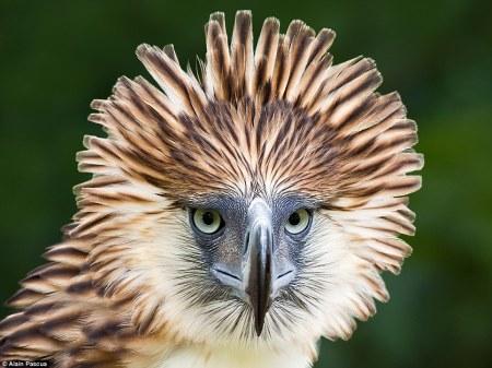 endangered_birds4