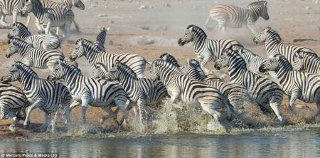kudu_zebra_escape
