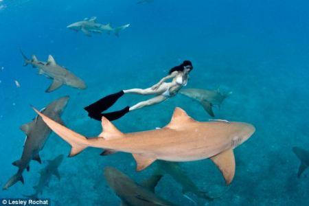 sharks_west_australia