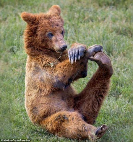 bear_stretching