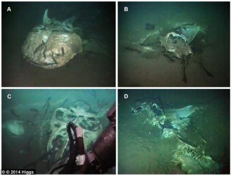 carcasses_marine_creatures