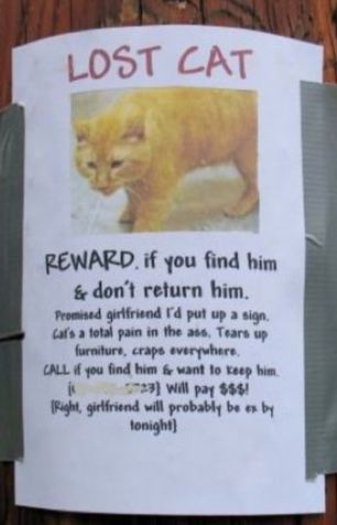 cat_dont_return