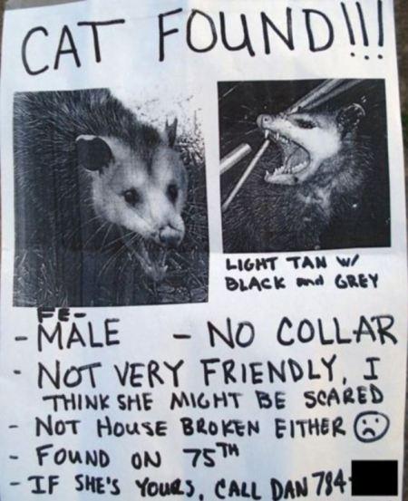 cat_missing