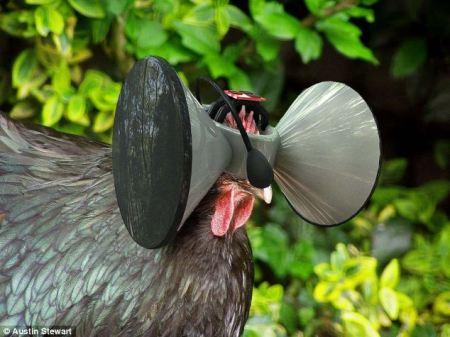 chicken_virtualworld