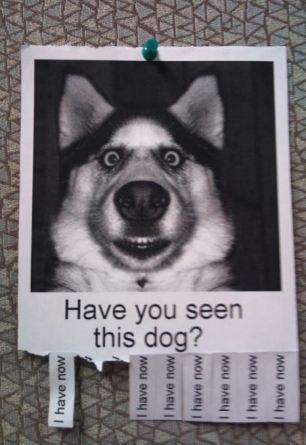 dog_missing