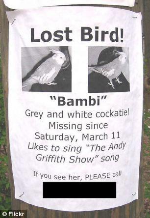lost_bird