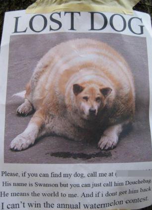 funny-lost-pet-signs-2.jpg