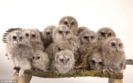 orphans_owl