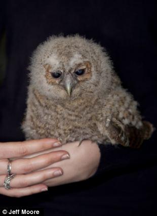 owl_orphan2