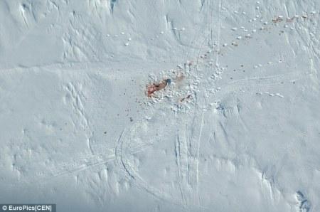 polar_bear_butchered
