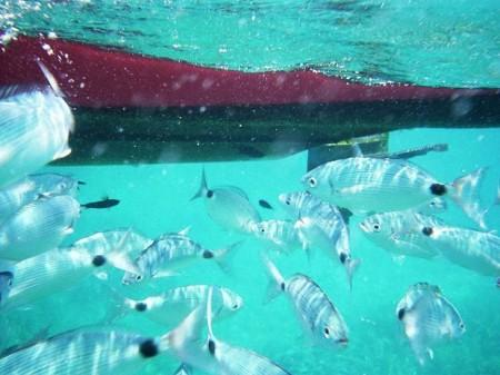 sous-les-eaux-0_620x465 (1)