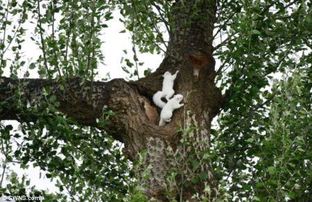 White squirrels2