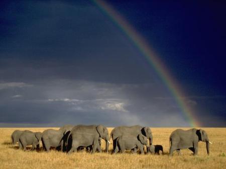 africa_animals
