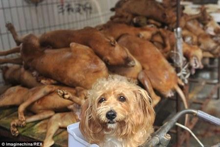 china_cruelty_dogs