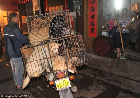 china_cruelty_dogs2