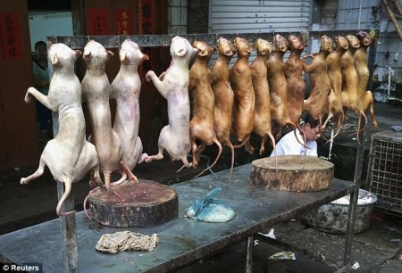 china_cruelty_dogs3