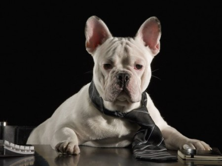 dog_examiner