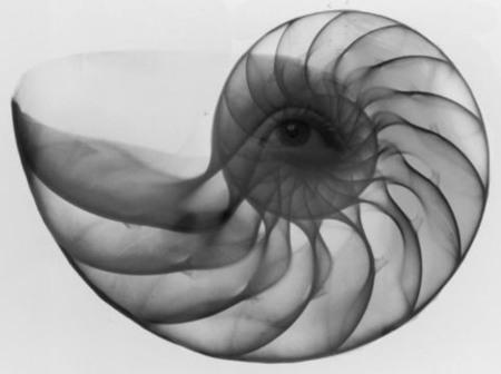 Fibonacci-sequence