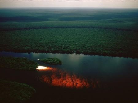 rainforest5