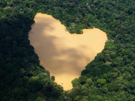 rainforest8
