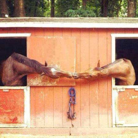 two_horse_in_love