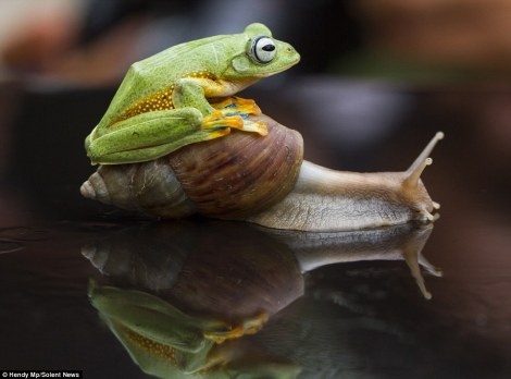 frog_snail