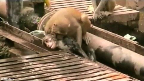 monkey_hero